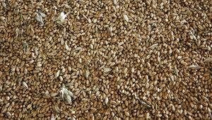 Отиващата си година напълни хамбарите в Добричко, но зърнопроизводителите правят тежка равносметка