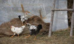 Миналата седмица датските власти наредиха на една ферма да унищожи над 250 000 яйца, внесени от Германия и заразени със силно патогенния вирус H5N8.